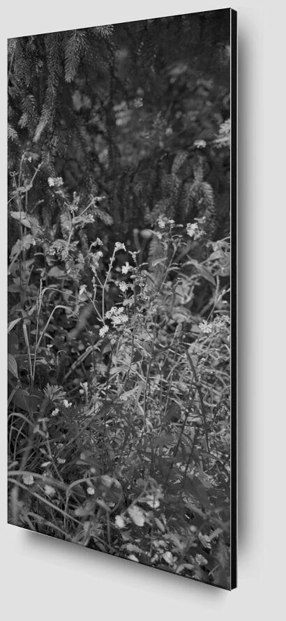 The mountain is in my garden 13 from jean michel RENAUDIN Zoom Alu Dibond Image