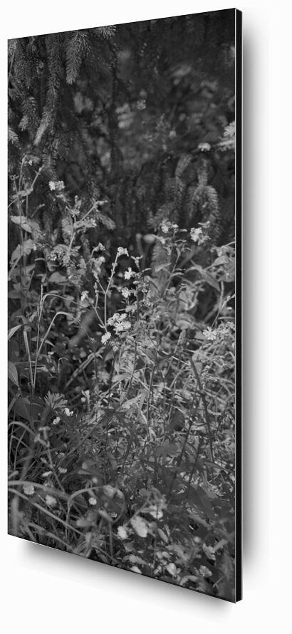 The mountain is in my garden 13 from jean michel RENAUDIN, Prodi Art, garden, wild herbs, plant, ecology, herbs, garden, wild, weeds, vegetable, ecology, herbs, nature