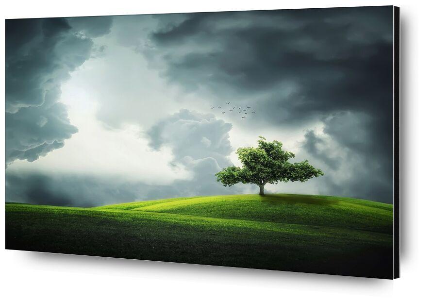 L'arbre de Pierre Gaultier, Prodi Art, arbre, des oiseaux, terres, paysage, fleur, saison, plante, été, amour, mignonne, Naturel, nature, conception, animal, forêt, floral, parc, herbe, vert