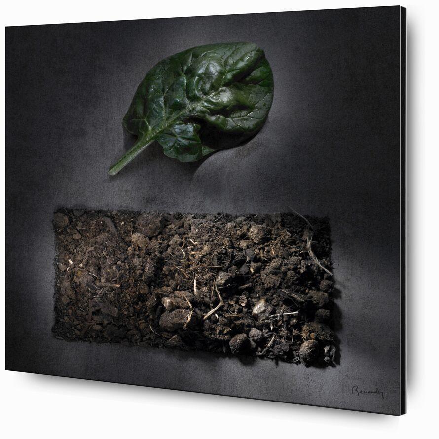 Objectif TERRE !  #5 de jean michel RENAUDIN, Prodi Art, terres arables, En traitement, terres, humus, transformation, fruits, compost, terre végétale, soleil, des légumes