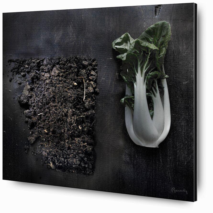 Objectif TERRE !  #8 de jean michel RENAUDIN, Prodi Art, terres, humus, fruits, des légumes, transformation, compost, terre végétale, Sol, des légumes, En traitement, terre végétale, terres arables