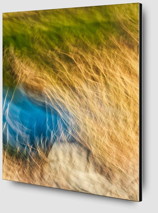 Herbe et salin de Céline Pivoine Eyes Zoom Alu Dibond Image