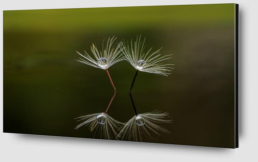 Peaceful nature from Pierre Gaultier Zoom Alu Dibond Image