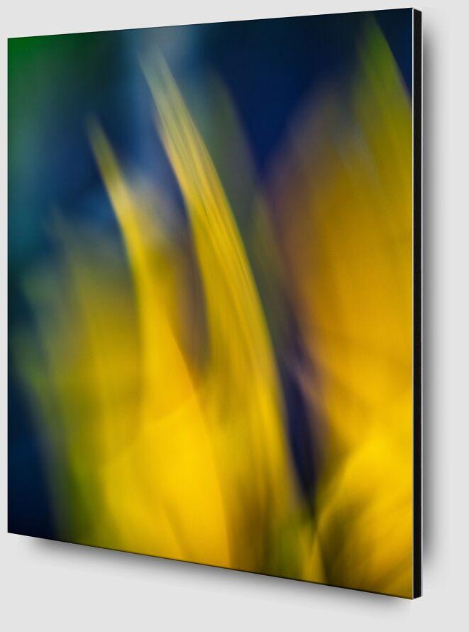 Le jaune fleurs de Céline Pivoine Eyes Zoom Alu Dibond Image