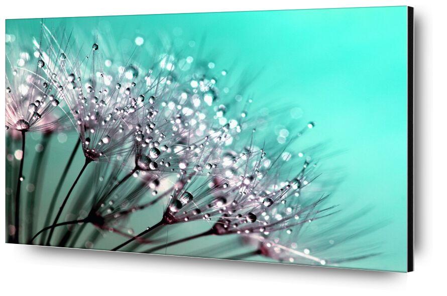 Délicate rosée de Pierre Gaultier, Prodi Art, la vie, flore, délicat, Frais, gros plan, macro, duveteux, fragilité, détail, beau, cannabis, beauté, bleu, lumière, tige, croissance, printemps, été, plante, nature, fleur, des graines, pissenlit
