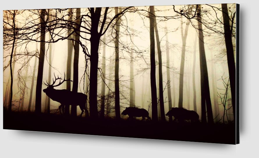 Silhouette of the forest from Pierre Gaultier Zoom Alu Dibond Image