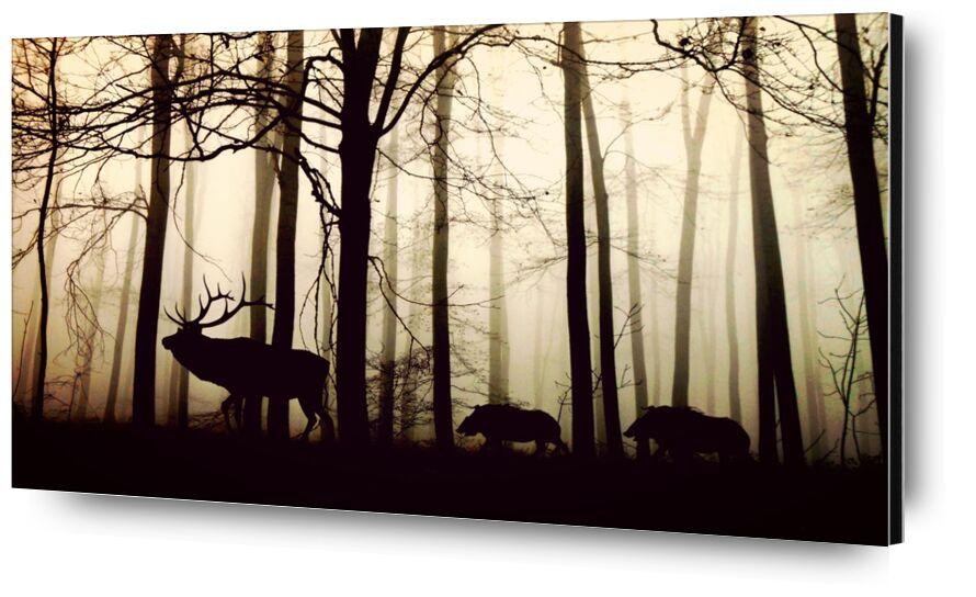 Silhouette de la forêt de Pierre Gaultier, Prodi Art, forêt, brouillard, hirsch, sangliers, nature, animaux, des arbres, hiver, ambiance, rétroéclairage, arbres d'hiver, silhouette, atmosphère, ombre, du froid, silencieux, animaux sauvages