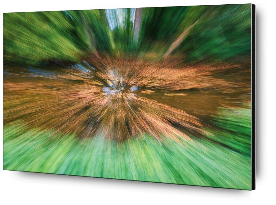 La bruyère de Céline Pivoine Eyes, Prodi Art, Fontainebleau, forêt, arbre, paysage, nature, Voyage, Photographie abstraite, art abstrait, flou artistique, Mouvement intentionnel de la caméra, ICM, Bruyère