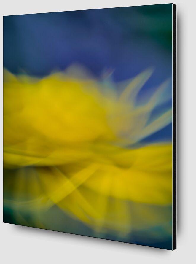 La fleur jaune de Céline Pivoine Eyes Zoom Alu Dibond Image