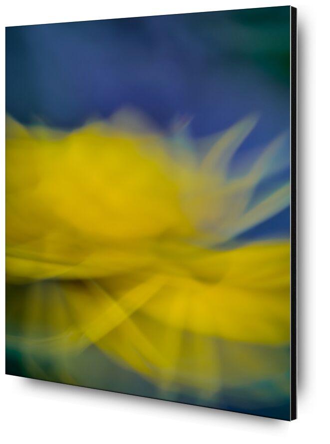 La fleur jaune de Céline Pivoine Eyes, Prodi Art, nature, jaune, violet, plante, Fleur jaune, ICM, Mouvement intentionnel de la caméra, flou artistique, art abstrait, Photographie abstraite, fleurs