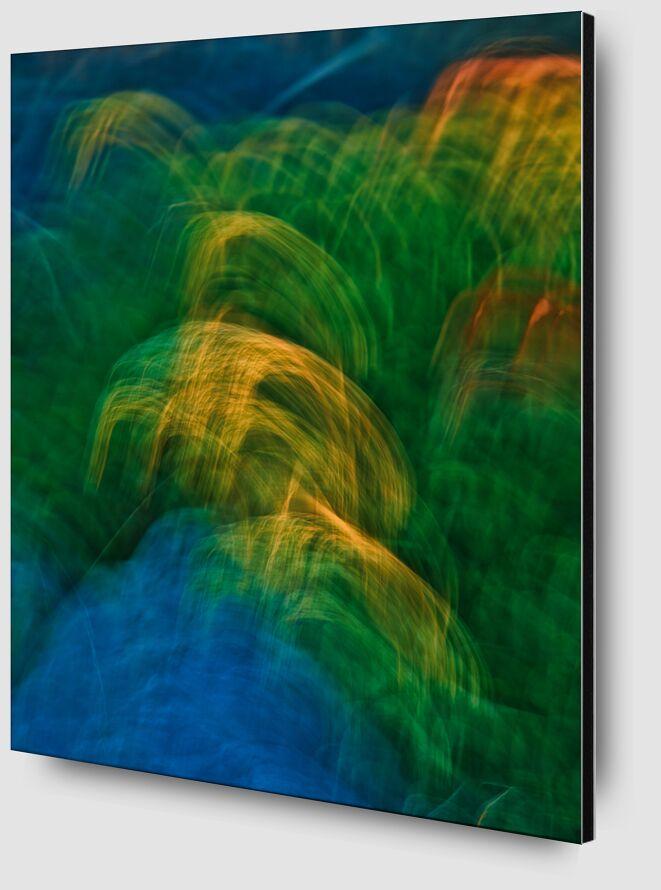 Les graminées colorées de Céline Pivoine Eyes Zoom Alu Dibond Image
