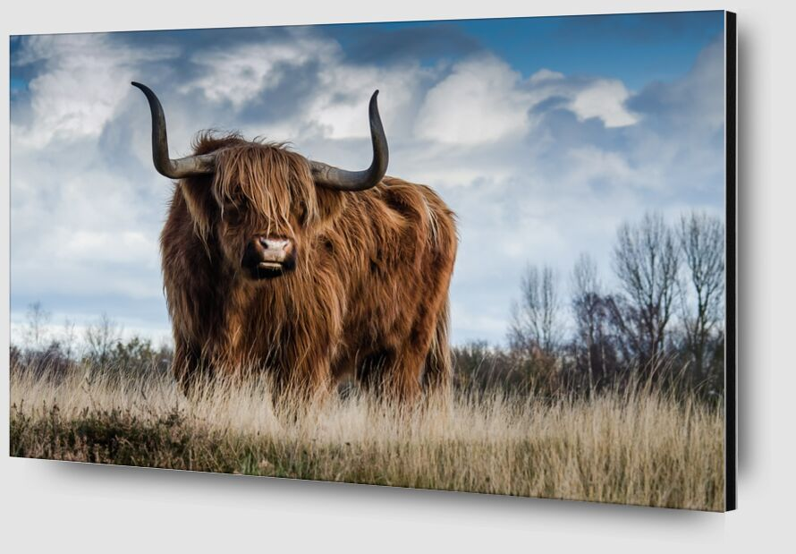 La prairie du buffle de Pierre Gaultier Zoom Alu Dibond Image