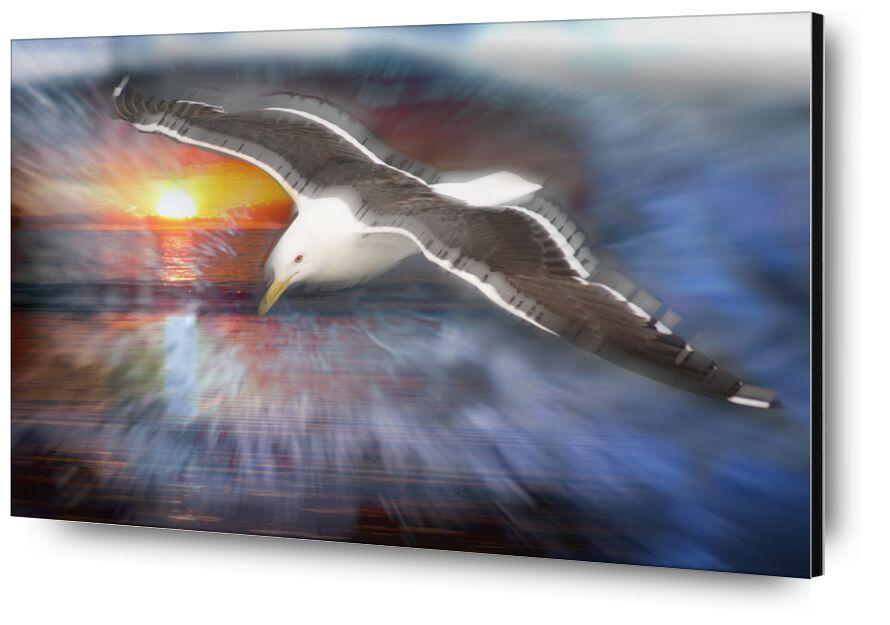 Flight of a seagull from Adam da Silva, Prodi Art, gull, flight, Sun, blue, bird, sea, ocean, beach