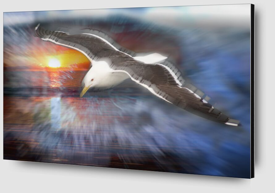 Flight of a seagull from Adam da Silva Zoom Alu Dibond Image