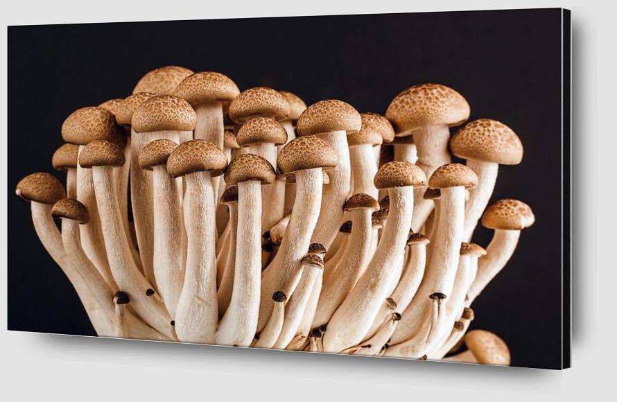 Nos champignons de Pierre Gaultier Zoom Alu Dibond Image