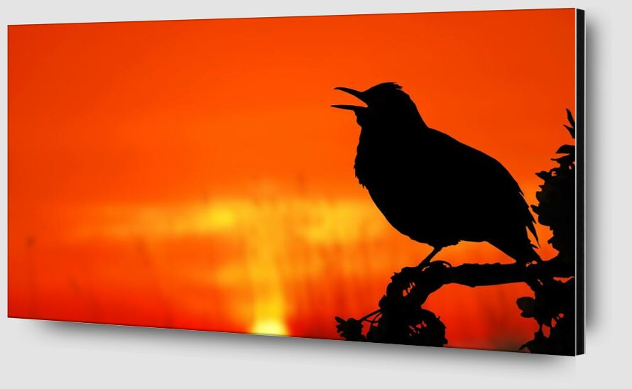 The silhouette of the bird from Pierre Gaultier Zoom Alu Dibond Image