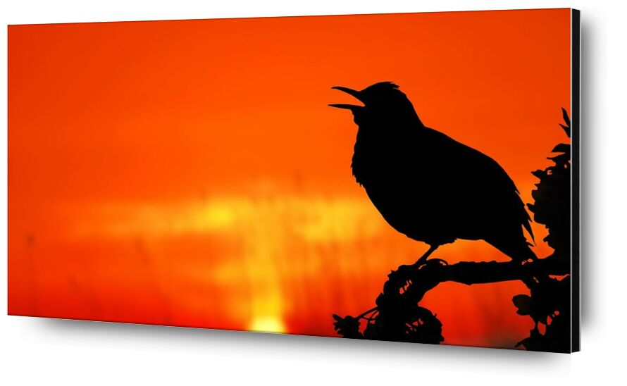 The silhouette of the bird from Pierre Gaultier, Prodi Art, animal, backlit, bird, dawn, dusk, evening, light, nature, outdoors, perched, silhouette, Sun, sunrise, sunset, tree, twilight
