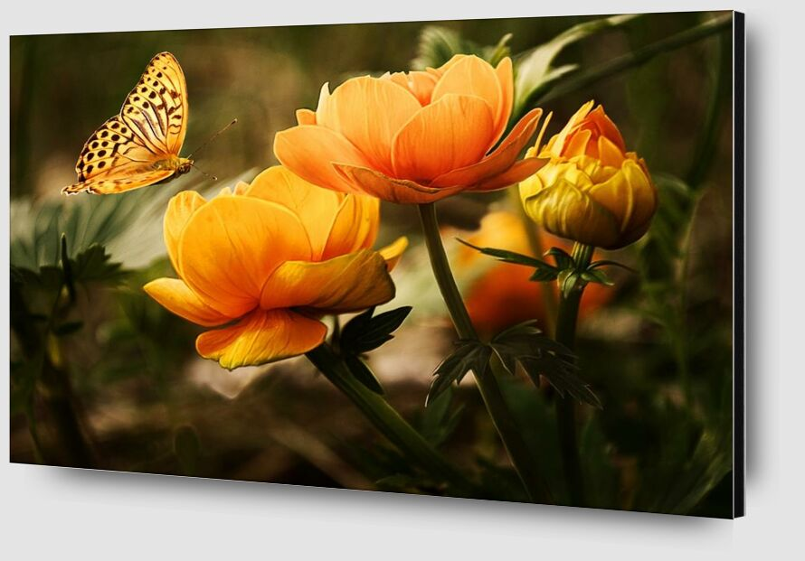 The butterfly and its plant from Pierre Gaultier Zoom Alu Dibond Image
