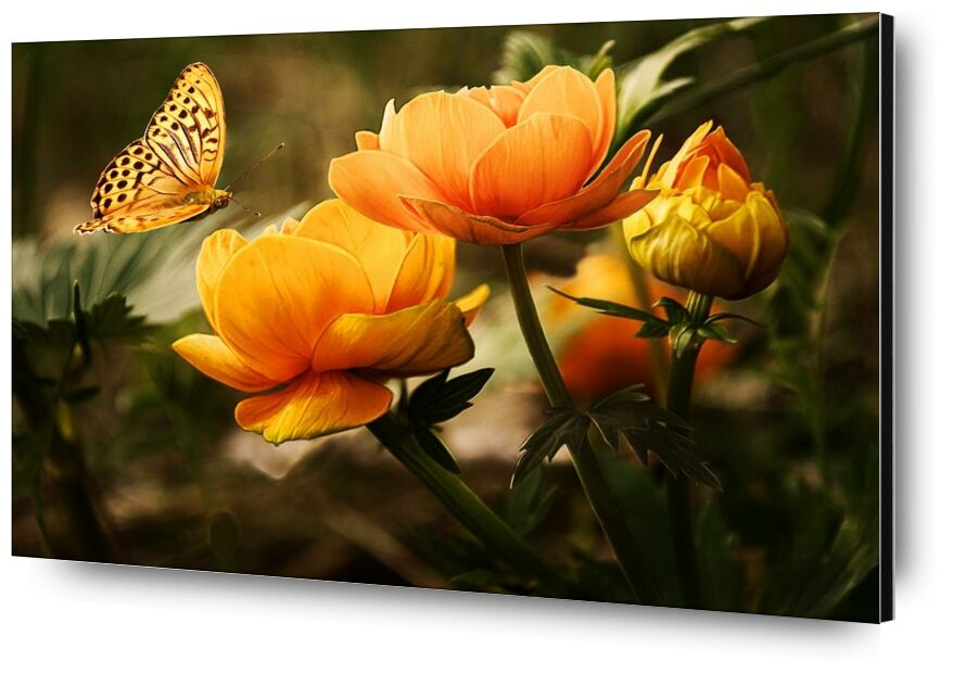 The butterfly and its plant from Pierre Gaultier, Prodi Art, bloom, blossoms, butterfly, flowers, garden, insect, nature, orange, plant