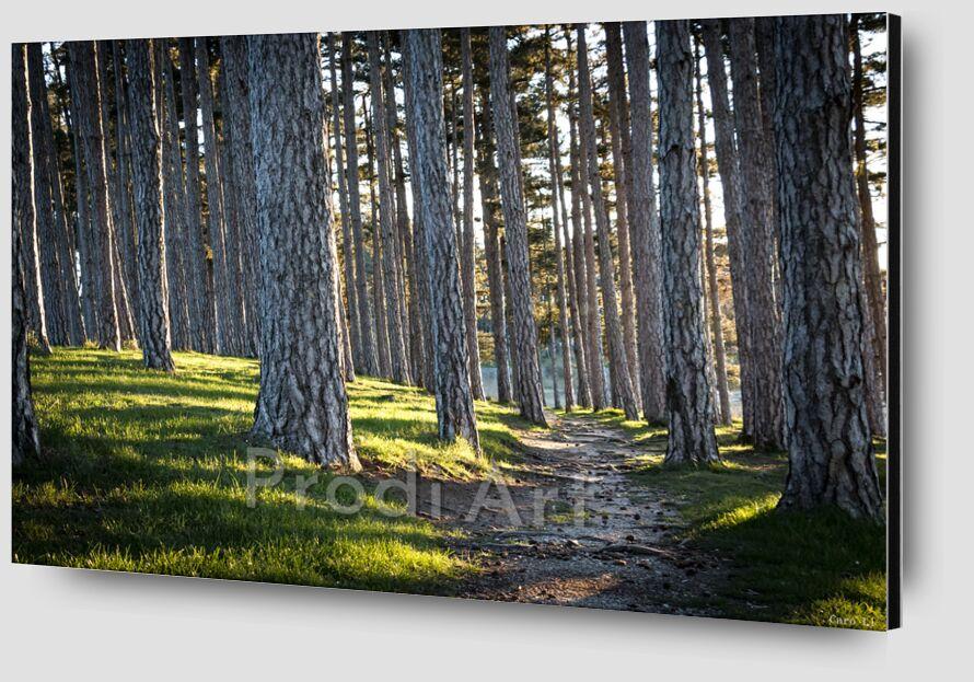 Le chemin de Caro Li Zoom Alu Dibond Image
