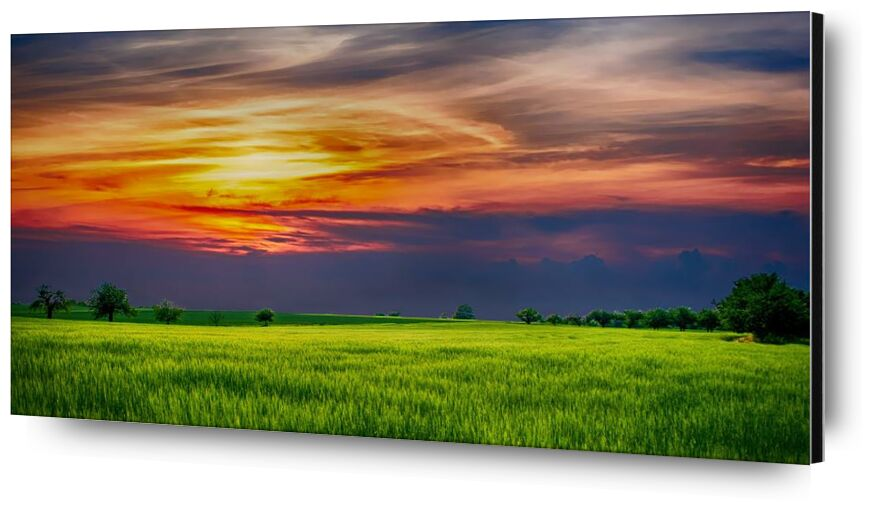 Soleil couchant from Aliss ART, Prodi Art, agriculture, clouds, country, countryside, cropland, farmland, field, grass, growth, landscape, nature, outdoor, rural, scenic, sky, Sun, sunlight, trees