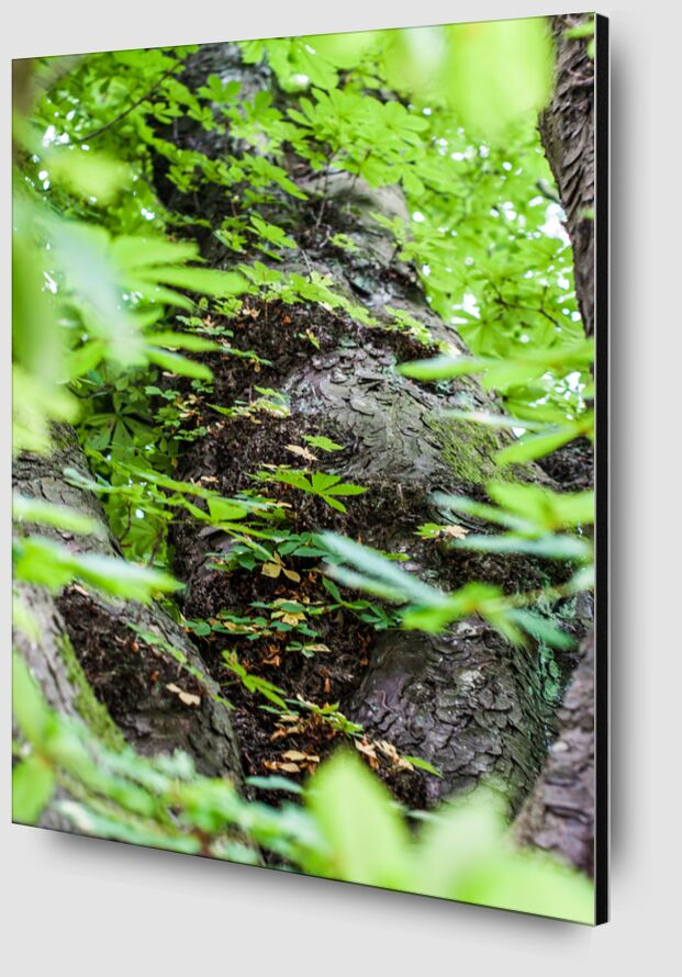 Voyage au coeur de la Nature de Marie Guibouin Zoom Alu Dibond Image