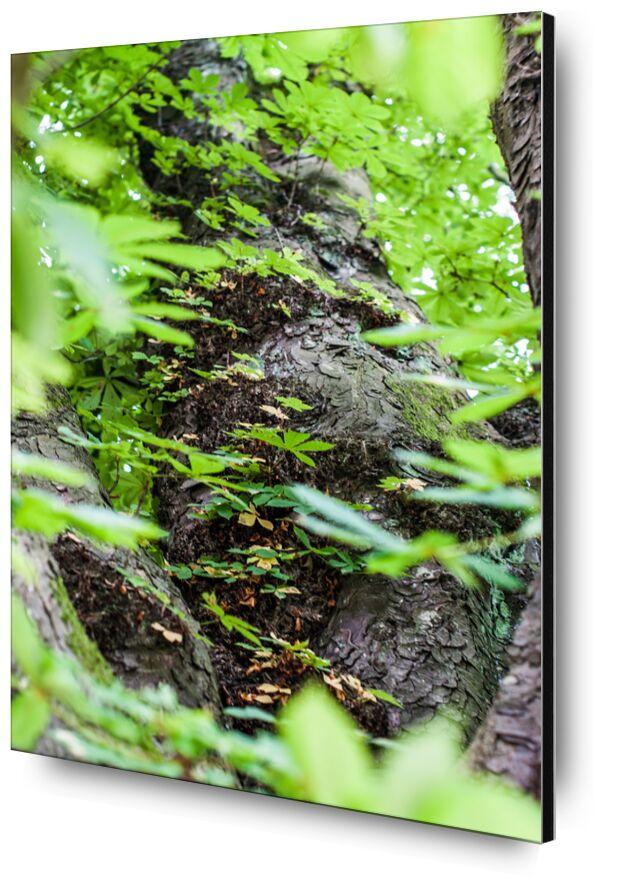 Voyage au coeur de la Nature de Marie Guibouin, Prodi Art, arbre, nature, feuilles, forêt, marie guibouin, écorce