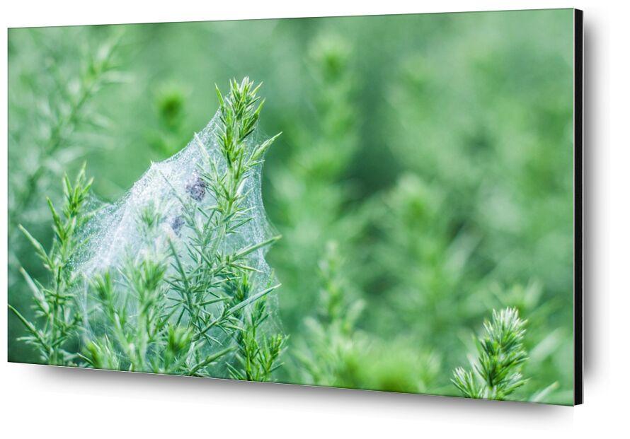Précieuse fragilité de Marie Guibouin, Prodi Art, vert, marie guibouin, nature, toile d'araignée, rosée, matin