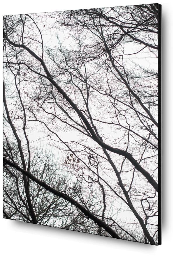 Spectacle inspirant de Marie Guibouin, Prodi Art, branches, nature, forêt, arbres, marie guibouin, bois