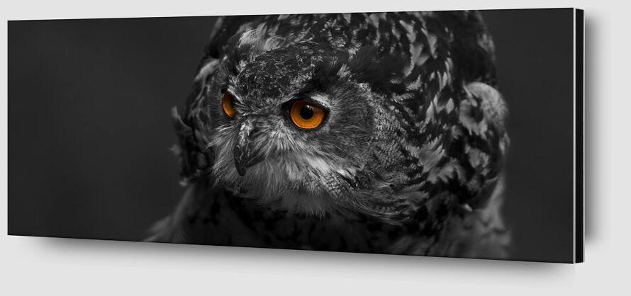 Owl's eyes from Pierre Gaultier Zoom Alu Dibond Image