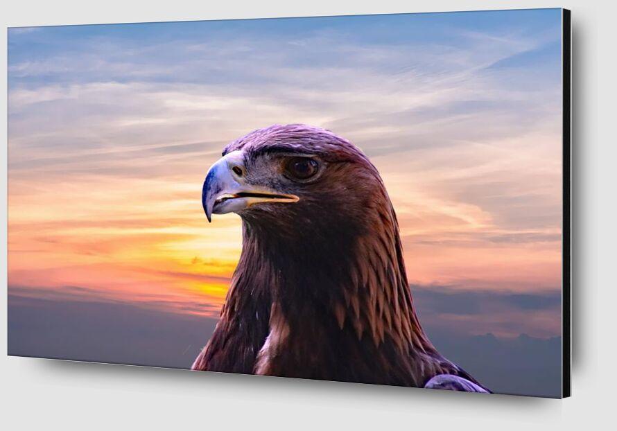 Tête de l'aigle de Pierre Gaultier Zoom Alu Dibond Image