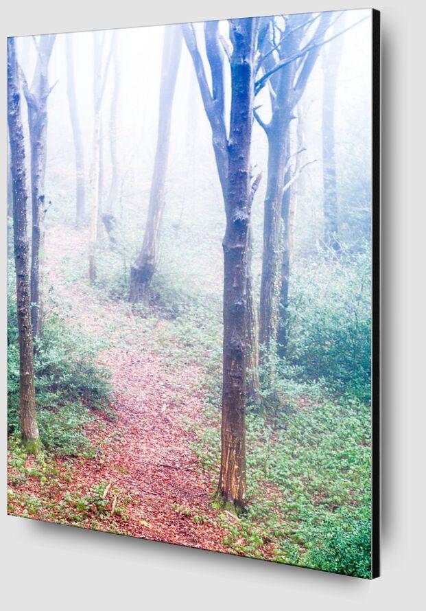 Dans les bois de Marie Guibouin Zoom Alu Dibond Image