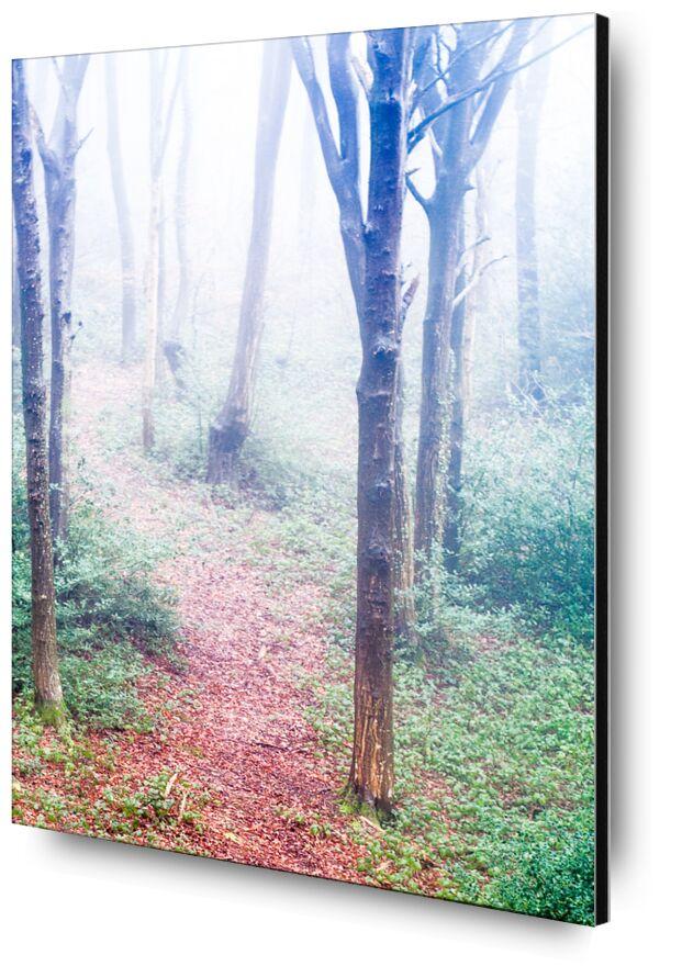 Dans les bois de Marie Guibouin, Prodi Art, brume, hiver, matin, nature, marie guibouin, forêt, bois