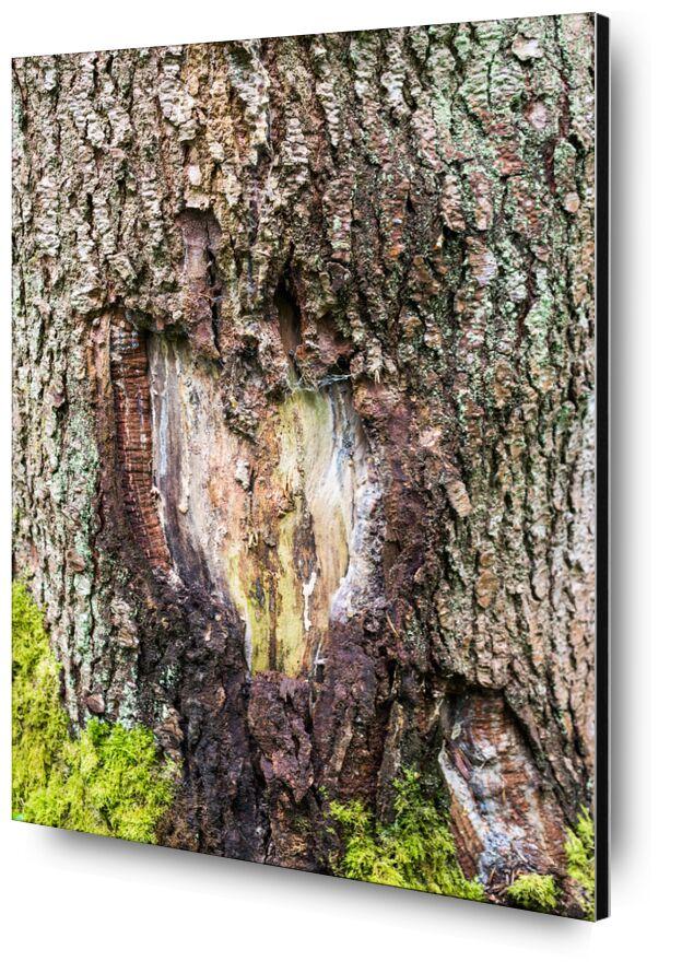Touché en plein coeur de Marie Guibouin, Prodi Art, vert, nature, arbre, écorce, saint valentin, marie guibouin, amour, coeur