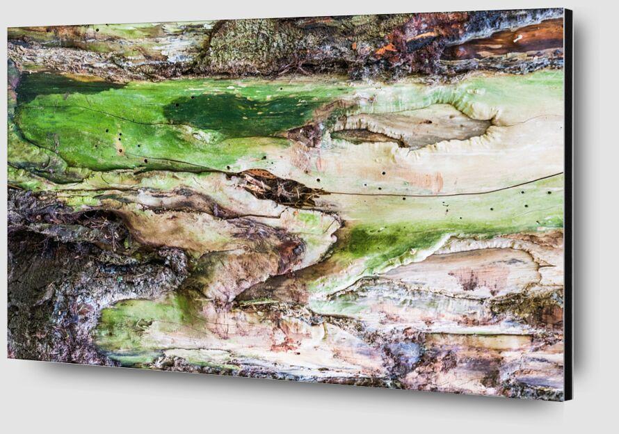 Le bois vert de Marie Guibouin Zoom Alu Dibond Image