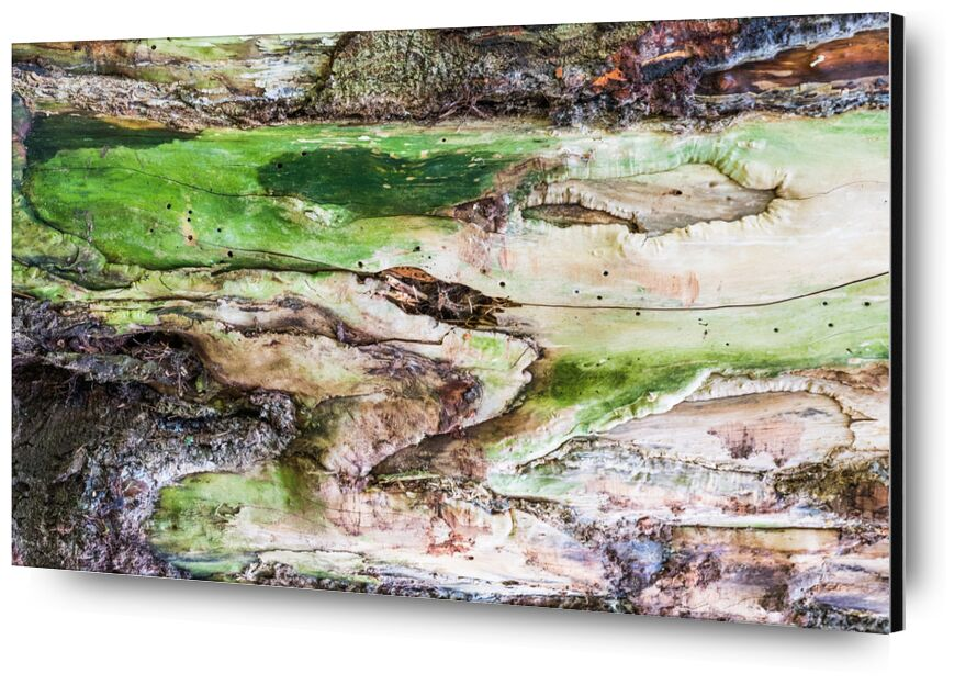 Le bois vert de Marie Guibouin, Prodi Art, sculpture, marie guibouin, vert, écorce, arbre