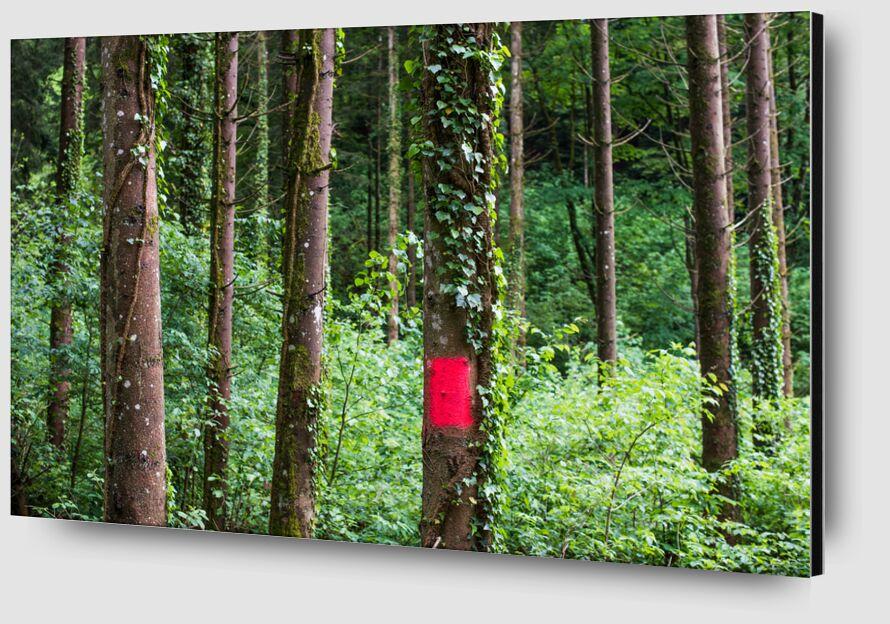 Zone rouge de Marie Guibouin Zoom Alu Dibond Image