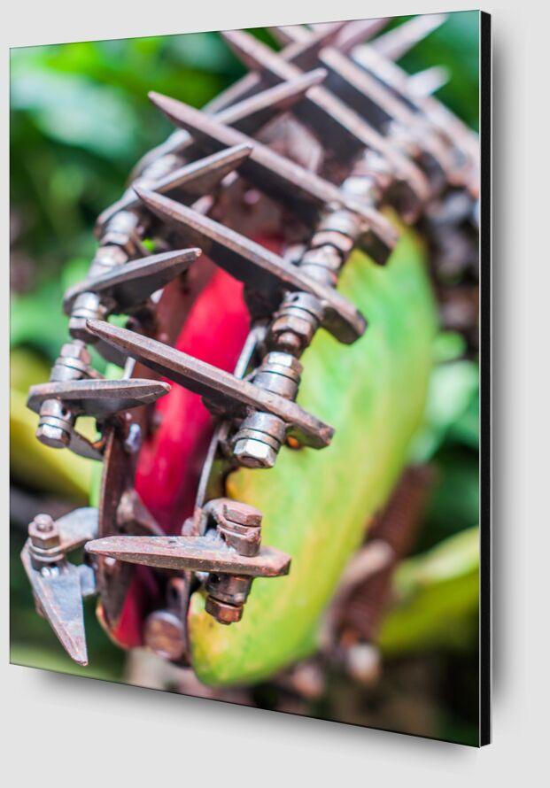 Plante carnivore Art - serre tropicale de Marie Guibouin Zoom Alu Dibond Image