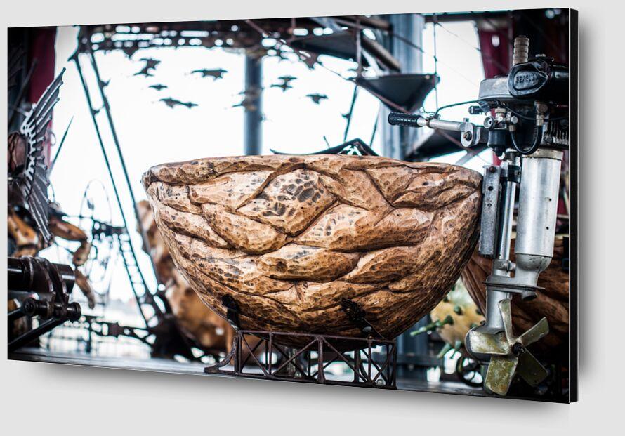 Noix - carrousel des mondes marins de Marie Guibouin Zoom Alu Dibond Image