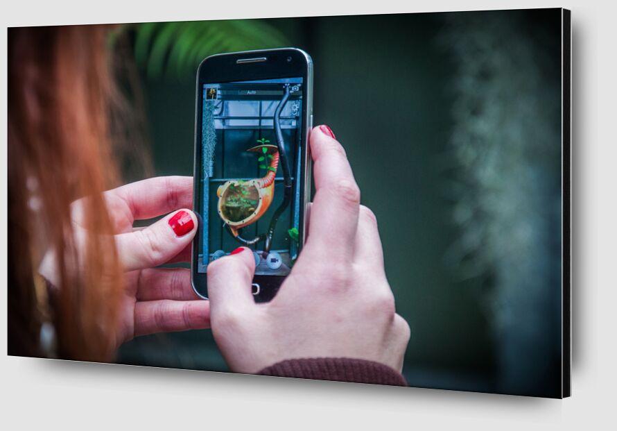 Hand's phone plant de Marie Guibouin Zoom Alu Dibond Image