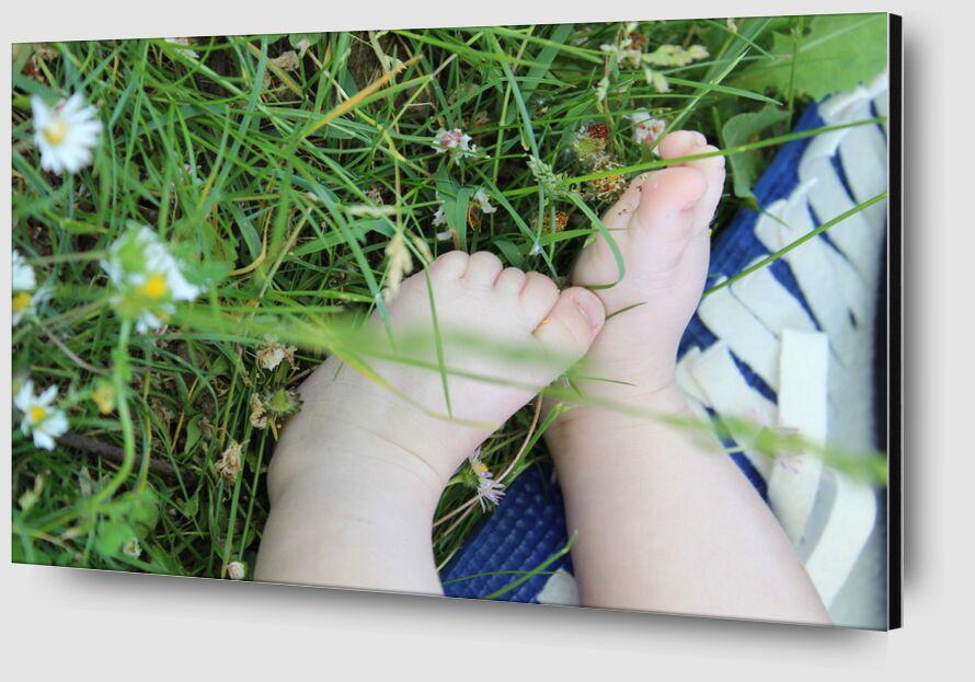 Petits pieds dans l'herbe de jenny buniet Zoom Alu Dibond Image