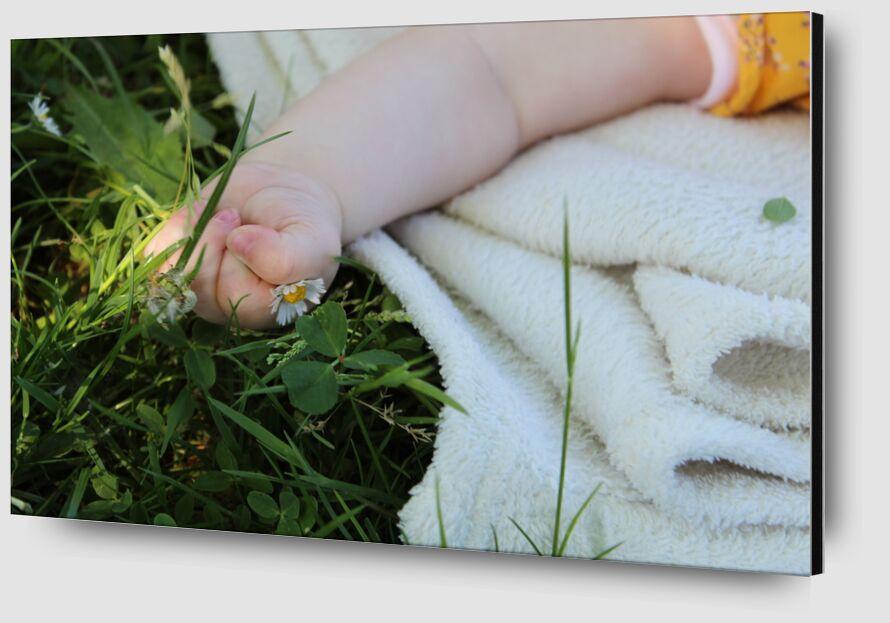 Petite main dans l'herbe de jenny buniet Zoom Alu Dibond Image