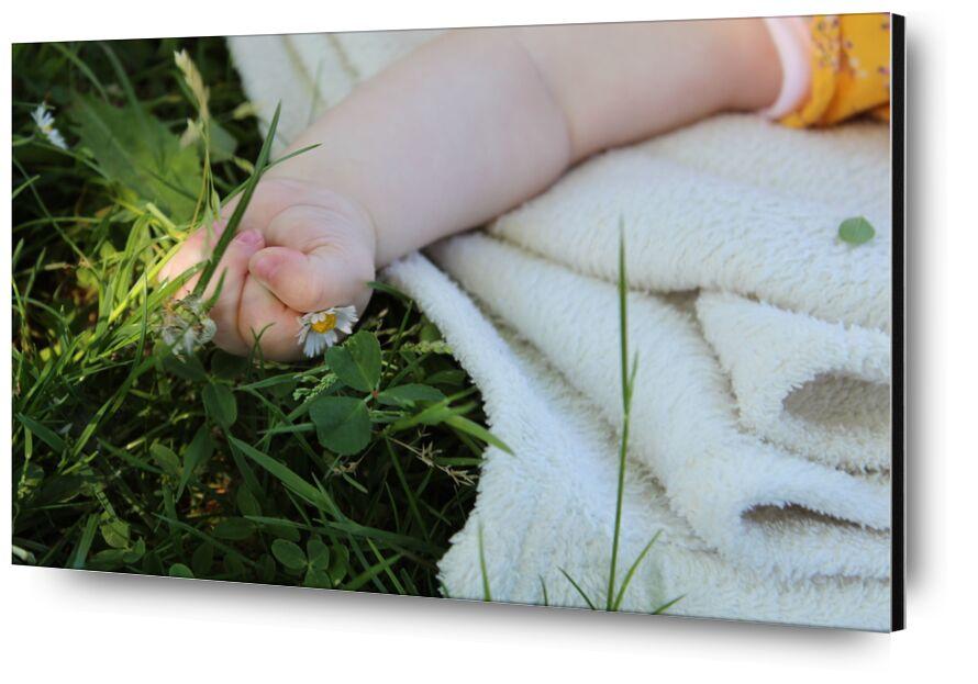 Petite main dans l'herbe de jenny buniet, Prodi Art, fleur, nature, bébé