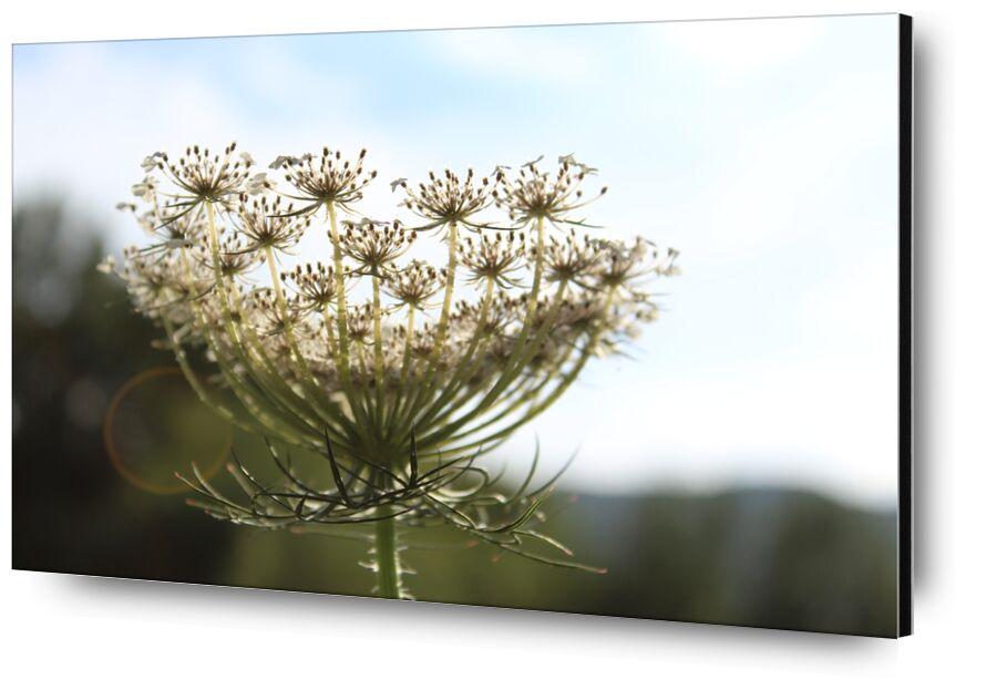 Fleur en lumière de jenny buniet, Prodi Art, fleur, lumière