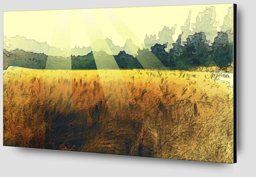 The wheat and its sun from Adam da Silva Zoom Alu Dibond Image