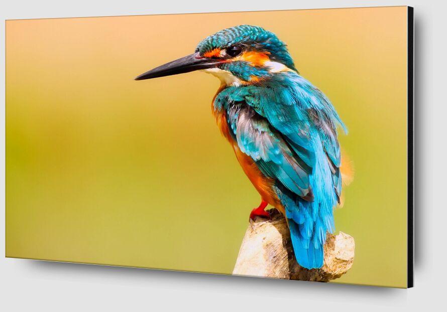 Kingfisher from Pierre Gaultier Zoom Alu Dibond Image
