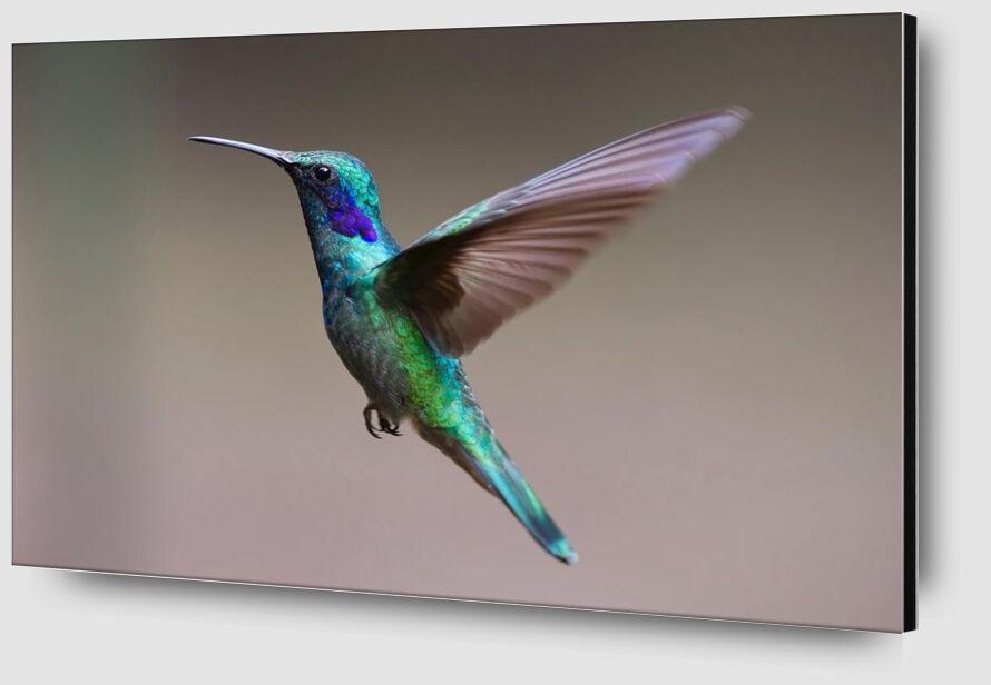 The Hummingbird from Pierre Gaultier Zoom Alu Dibond Image