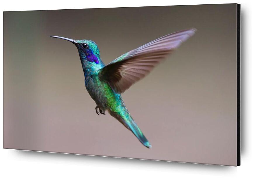 The Hummingbird from Pierre Gaultier, Prodi Art, animal, avian, beak, bird, blur, close-up, color, colourful, daylight, exotic, feathers, focus, hummingbird, iridescent, little, outdoors, plumage, side, view, wild, wildlife, wings