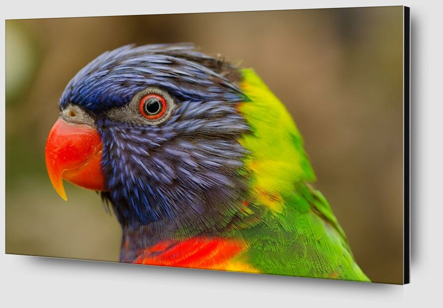 Parrot of the islands from Pierre Gaultier Zoom Alu Dibond Image