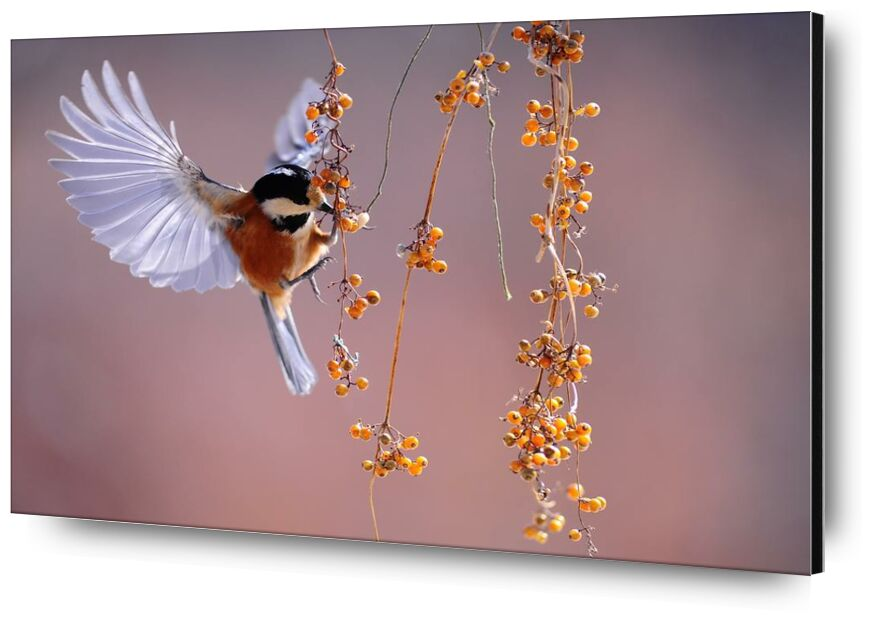 En plein vol de Pierre Gaultier, Prodi Art, animal, animal, la photographie, oiseau, en volant, macro, nature